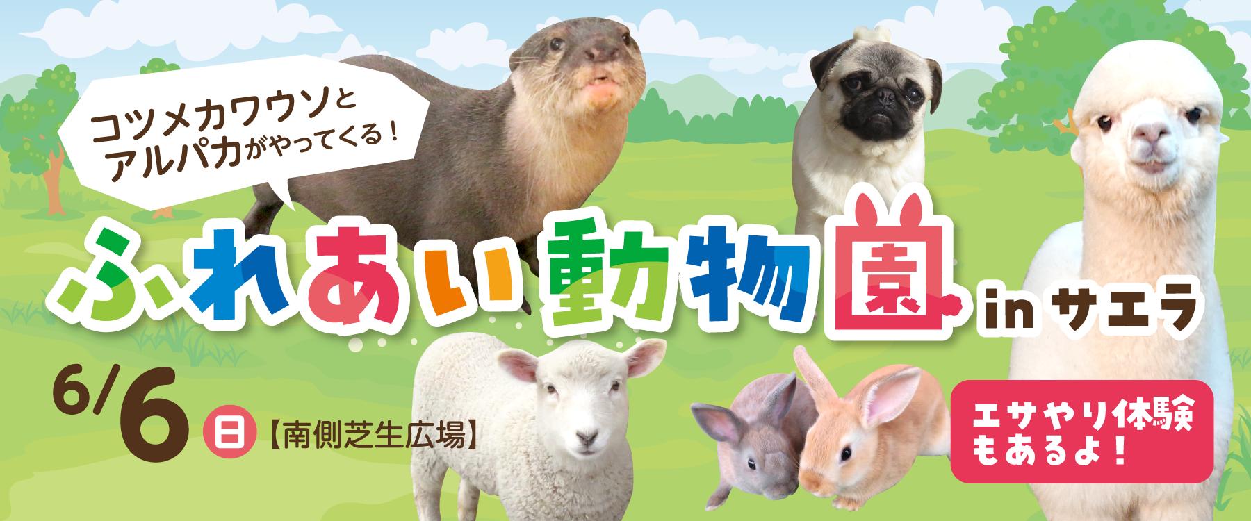 画像:6月6日(日)コツメカワウソ・アルパカがやってくる!ふれあい動物園inサエラ