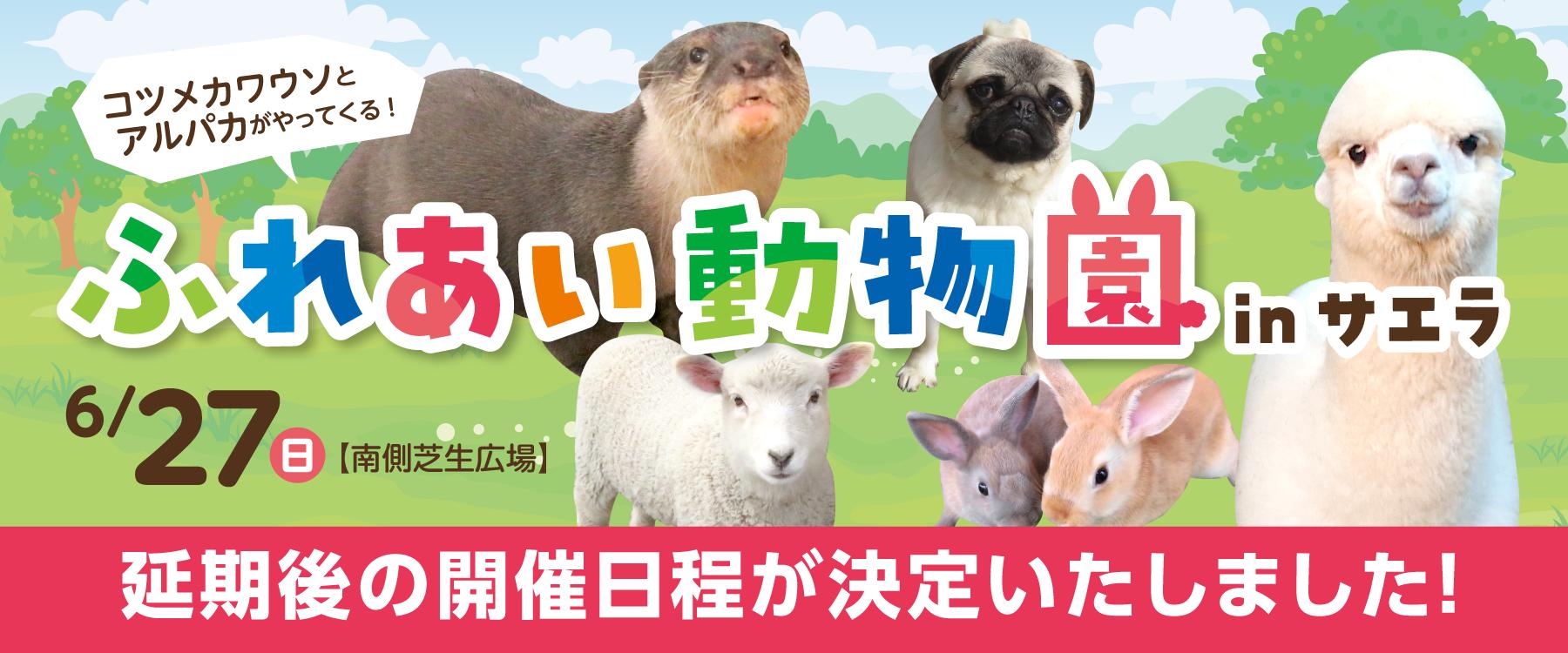 画像:開催決定 6月27日(日)コツメカワウソ・アルパカがやってくる!ふれあい動物園inサエラ