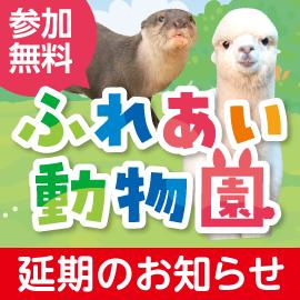 画像:【延期】6月6日(日)コツメカワウソ・アルパカがやってくる!ふれあい動物園inサエラ
